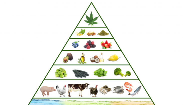 The Green Food Pyramid